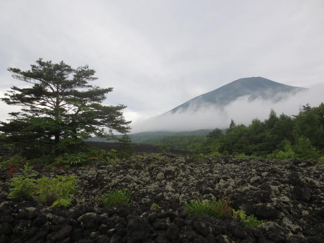 Iwate-san: Blumen im Nebel images/iwate-san/20.jpg