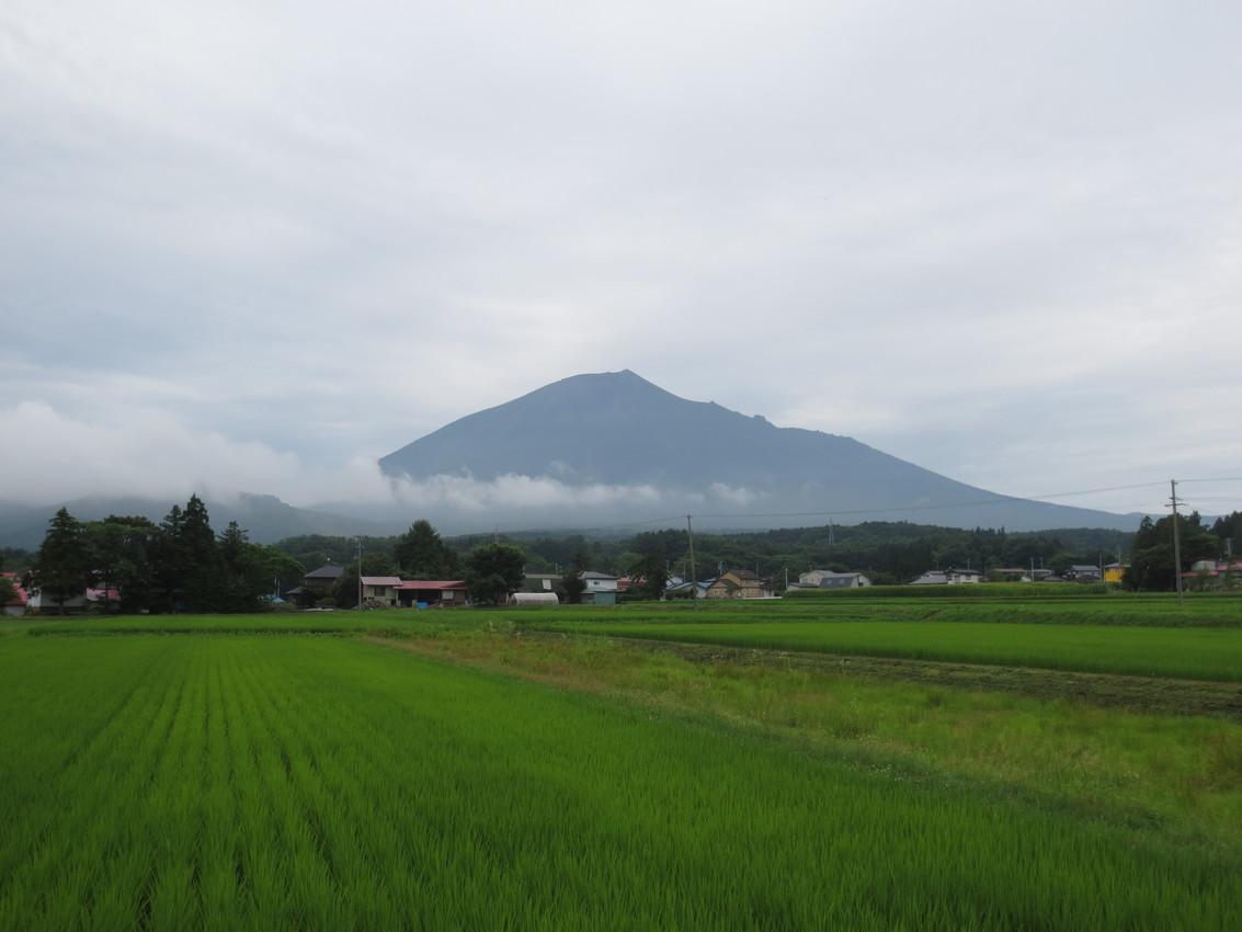 Iwate-san: Blumen im Nebel images/iwate-san/21.jpg