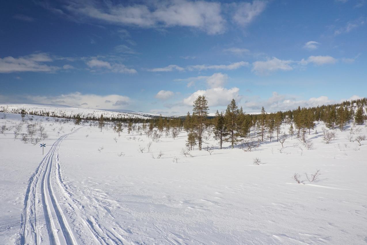 Lappland: Stille Wälder und windige Fjälls images/lapland18/02.jpg