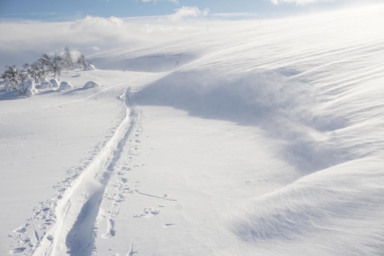 Lappland: Stille Wälder und windige Fjälls images/lapland18/03.jpg