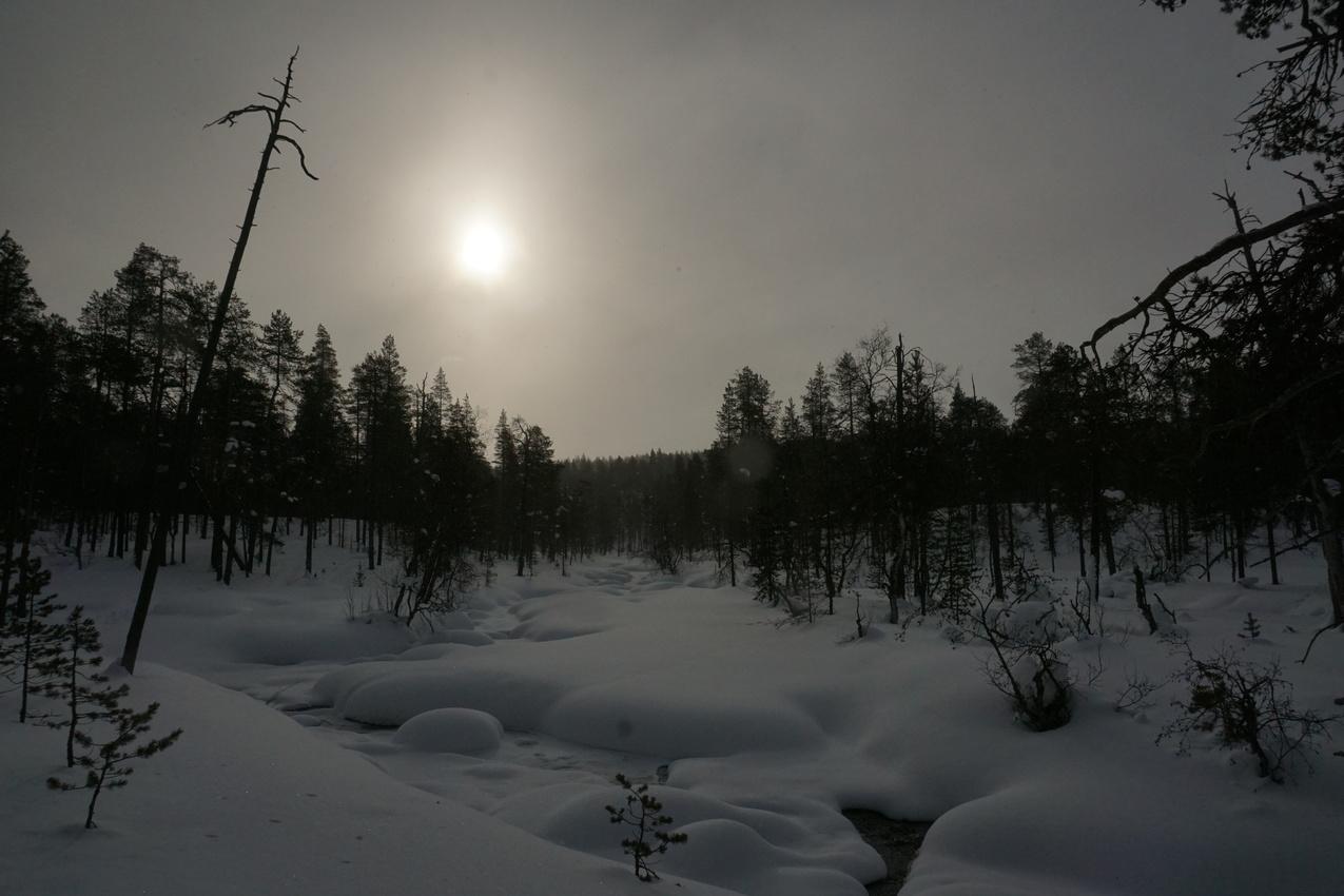 Lappland: Stille Wälder und windige Fjälls images/lapland18/06.jpg