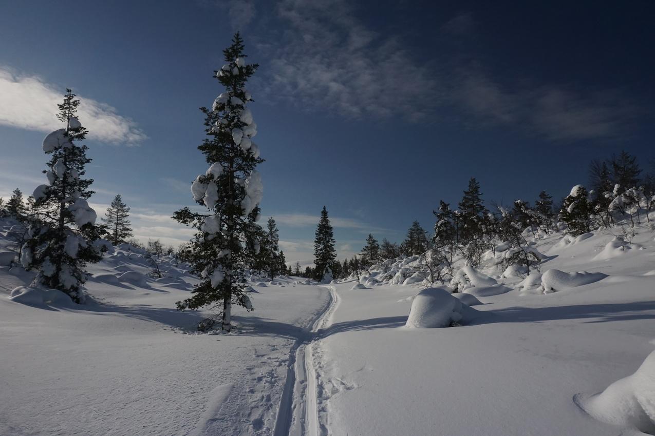 Lappland: Stille Wälder und windige Fjälls images/lapland18/07.jpg