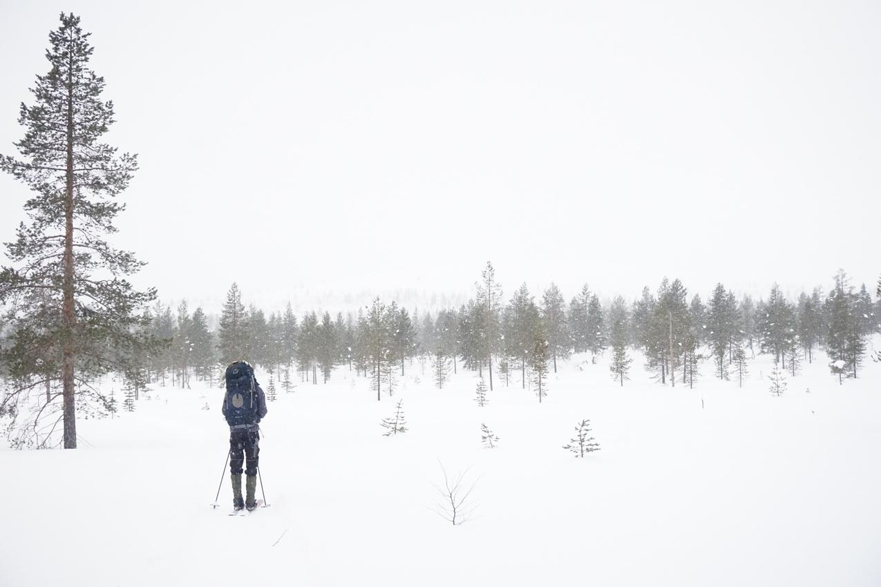 Lappland: Stille Wälder und windige Fjälls images/lapland18/14.jpg