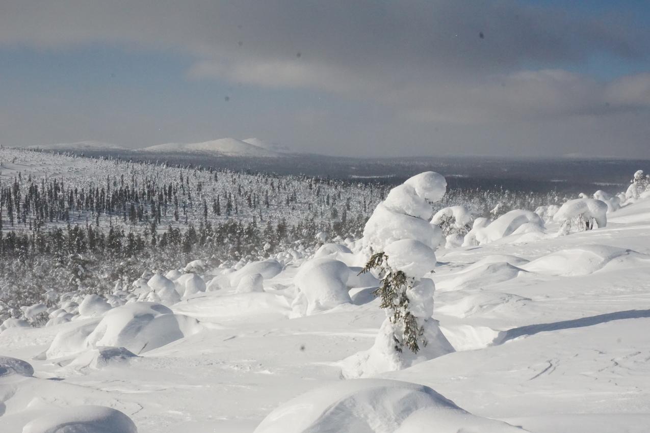 Lappland: Stille Wälder und windige Fjälls images/lapland18/15.jpg