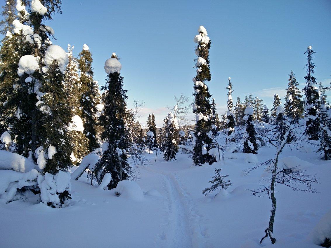 Lappland: Stille Wälder und windige Fjälls images/lapland18/16.jpg