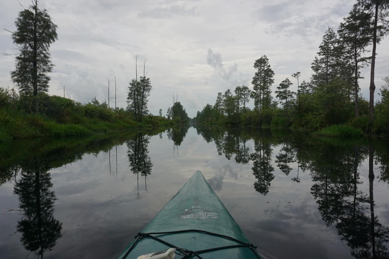 Okefenokee-Sumpf: Die Natur von ihrer wilden Seite images/okefenokee/02.jpg