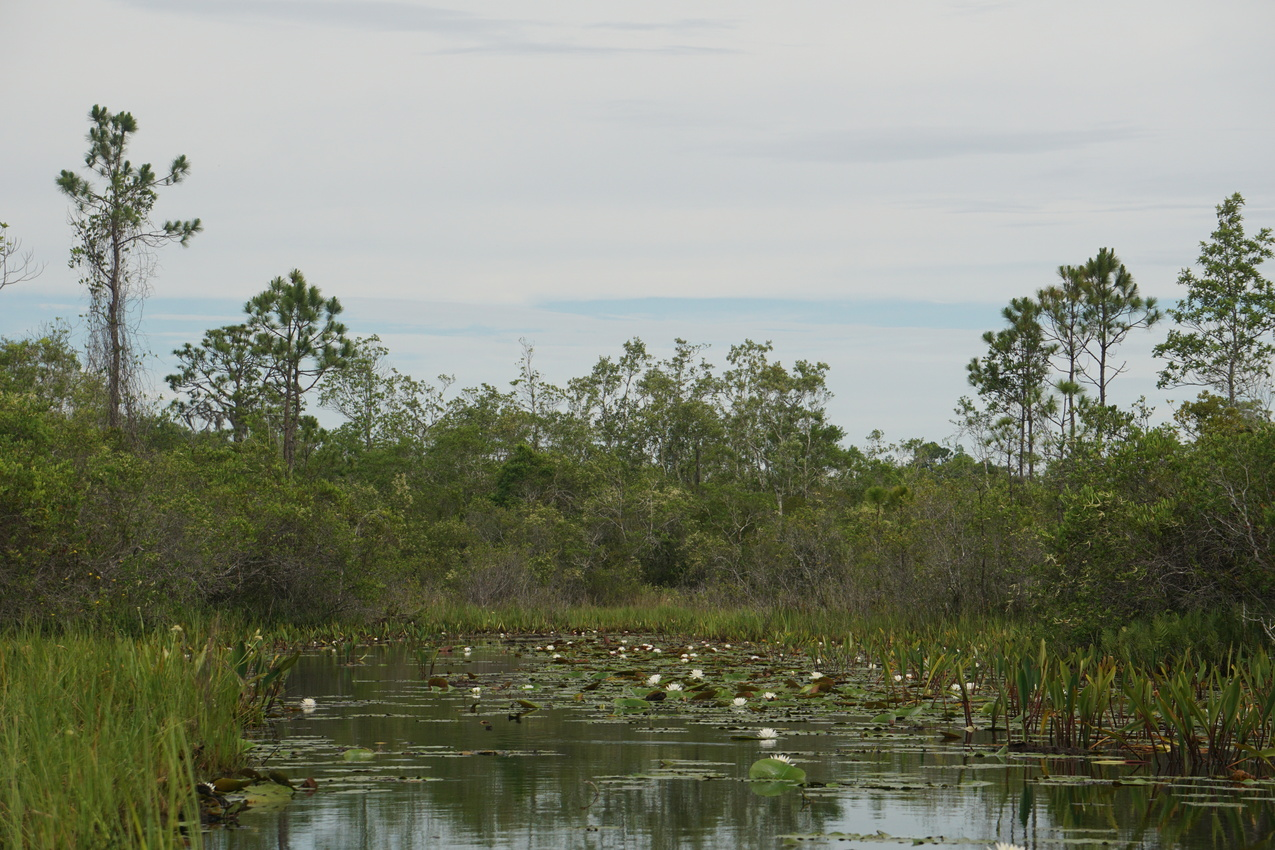 Okefenokee-Sumpf: Die Natur von ihrer wilden Seite images/okefenokee/11.jpg