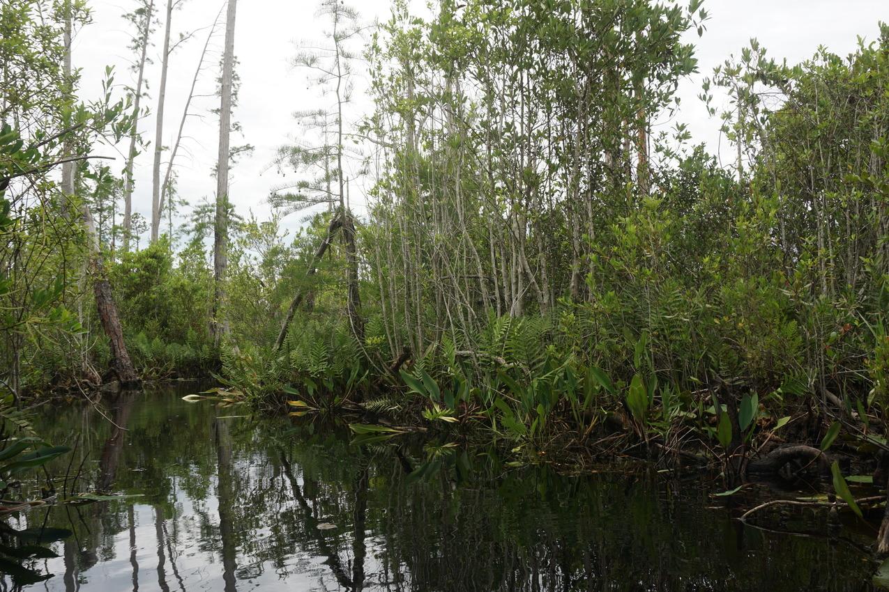 Okefenokee-Sumpf: Die Natur von ihrer wilden Seite images/okefenokee/13.jpg