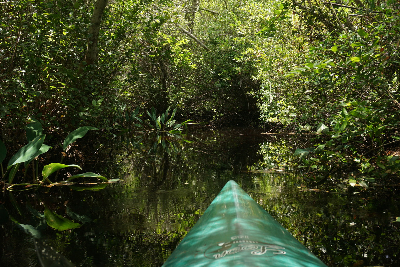Okefenokee-Sumpf: Die Natur von ihrer wilden Seite images/okefenokee/15.jpg