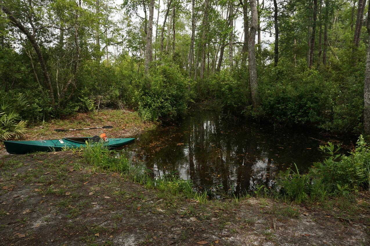 Okefenokee-Sumpf: Die Natur von ihrer wilden Seite images/okefenokee/16.jpg