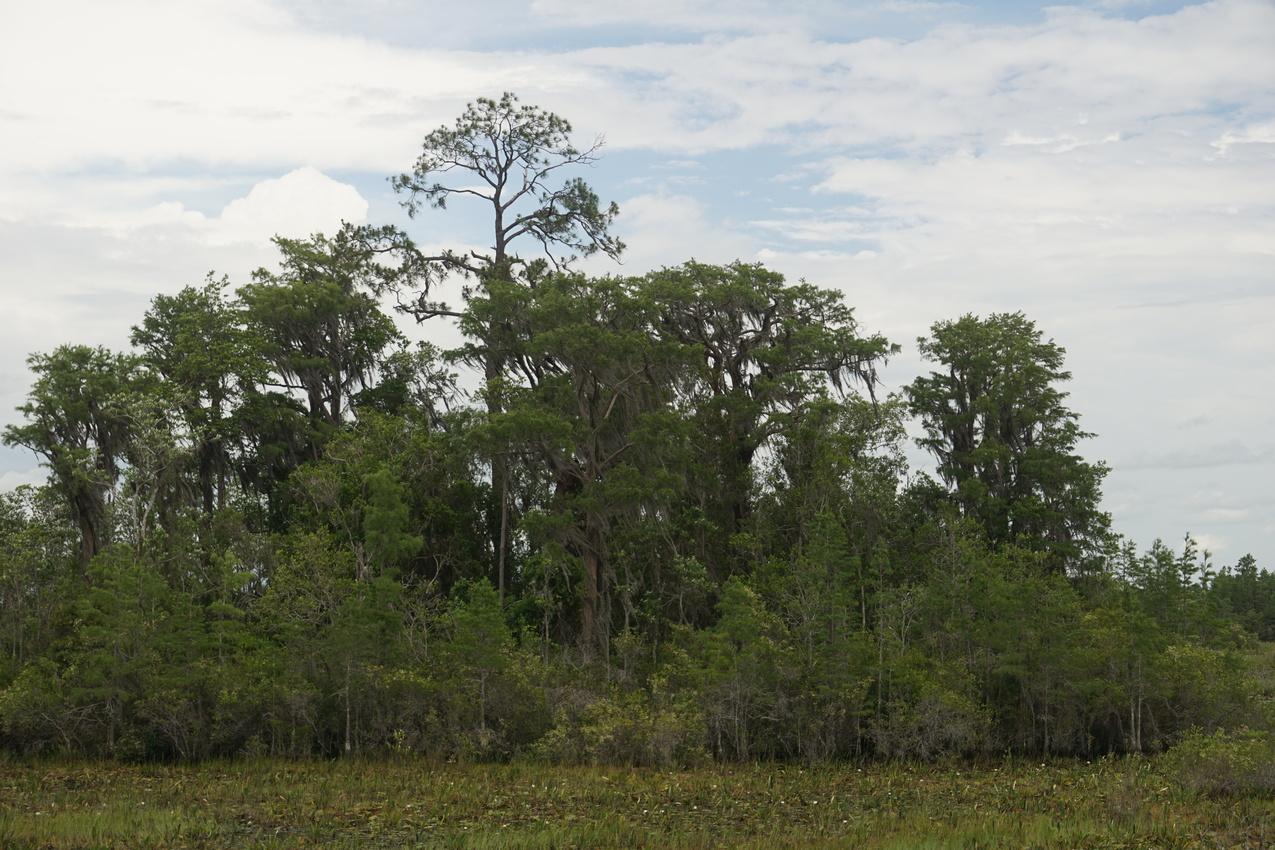 Okefenokee-Sumpf: Die Natur von ihrer wilden Seite images/okefenokee/22.jpg