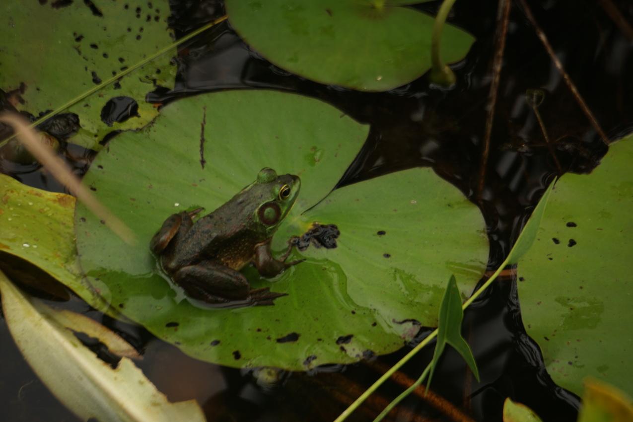 Okefenokee-Sumpf: Die Natur von ihrer wilden Seite images/okefenokee/26.jpg