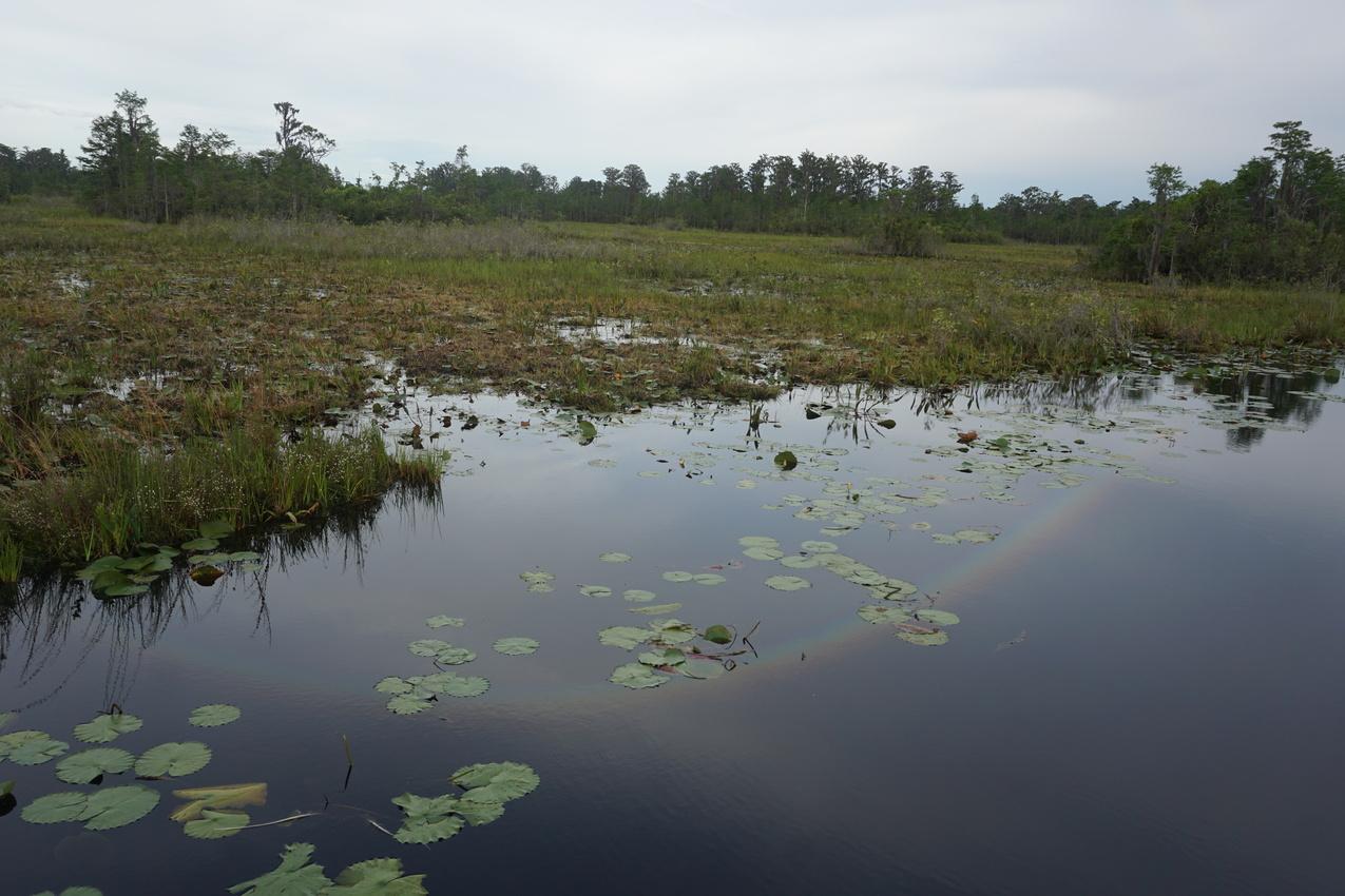 Okefenokee-Sumpf: Die Natur von ihrer wilden Seite images/okefenokee/27.jpg