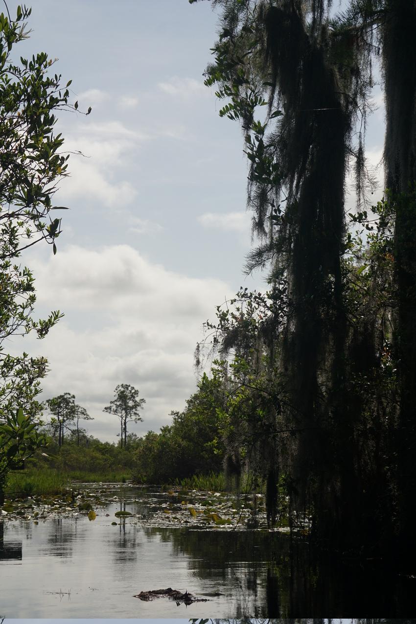 Okefenokee-Sumpf: Die Natur von ihrer wilden Seite images/okefenokee/29.jpg